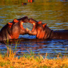 malawi-highlights-lake-wildlife4